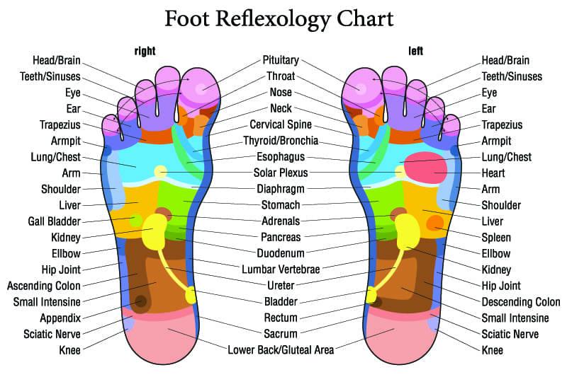 shiatsu-foot-massage-reflexology-chart